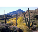 Cave Creek Recreation Area.png